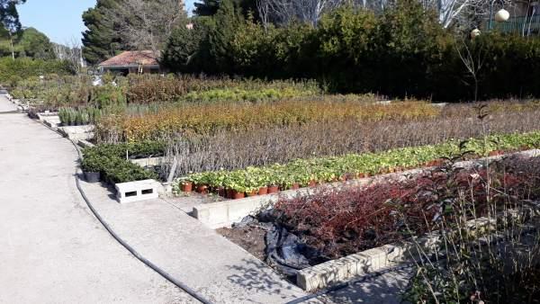 La DPZ distribuye más de 42.000 plantas a 134 municipios para decorar sus espaci