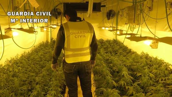 Plantación de marihuana decomisada en Montearagón (Toledo)