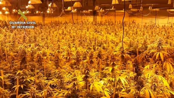 La mayor plantación de marihuana desmantelada en la provincia de Córdoba