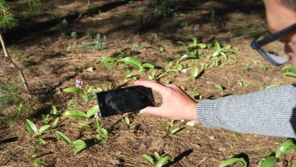 El Govern y la UIB ponen en marcha un proyecto de Ciencia Ciudadana en el Parque
