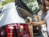 Cinco consejos para viajar con perros en el coche (y sin peligro)