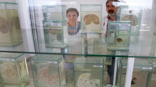 Inauguración museo anatomía patológica de Valdecilla