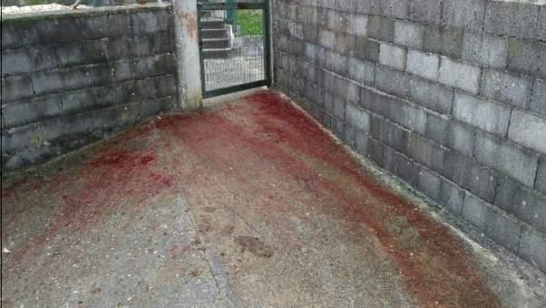 Investigados tres pontevedreses por golpear con estacas a caballos en Avión (Our