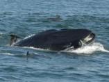 Rainer Schimpf atrapado por la ballena