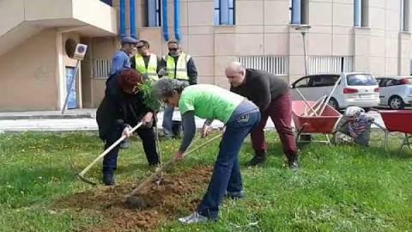Málaga.- Plantarán este lunes un almendro en recuerdo de las víctimas del desast