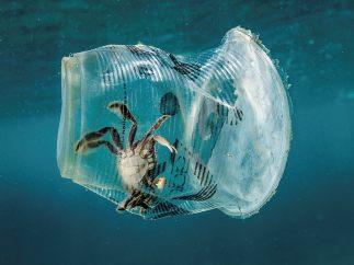 Atrapado por el plástico