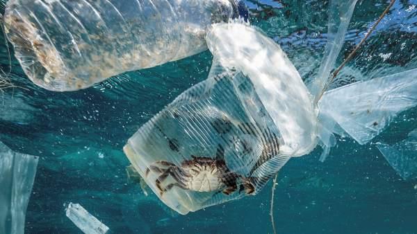 Un cangrejo permanece atrapado en un vaso de plástico en Filipinas.