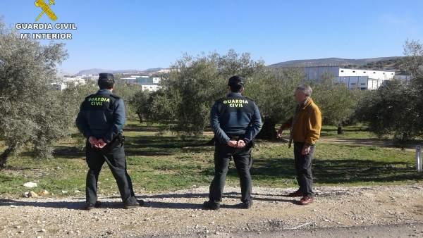 Operativos realizados por la Guardia Civil en la campaña de aceituna