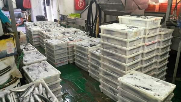 Retenido en el Puerto de Pasaia (Gipuzkoa) un pesquero portugués con 2.882 kg de
