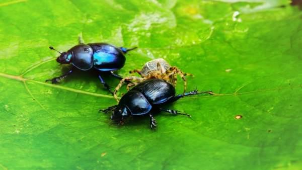 Investigadores asturianos reclaman mayor conservación de los invertebrados necró