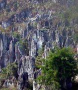 Un bosque de piedras