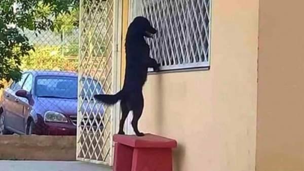 Imagen del perro visitando a su dueño en una escuela de México.