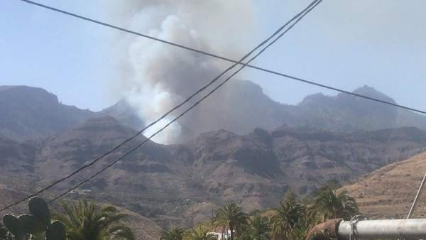 Sucesos.- Declarado un incendio en un palmeral de Fataga (Gran Canaria)