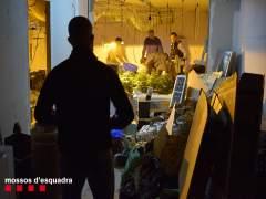 Sucesos.- Tres detenidos por asaltar una casa en Tarragona para robar una planta