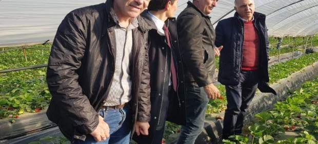 Huelva.- Productores de fresa de Francia, Italia y España analizan el desarrollo