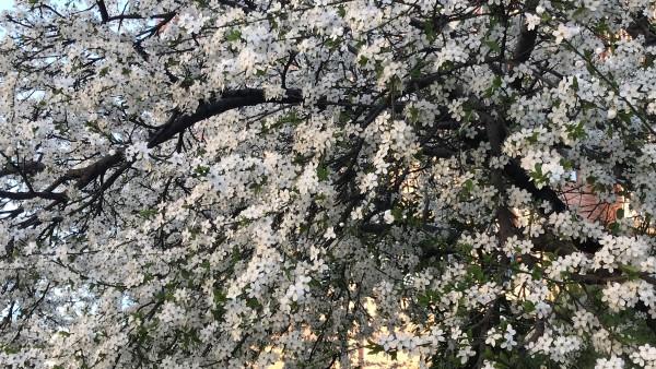 La primavera ha empezado con altas temperaturas y sin lluvias en la mayor parte del país.