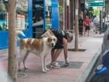 Almería.-El Ayuntamiento modificará la ordenanza de limpieza para obligar a los