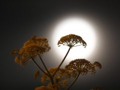 Noche primaveral con superluna
