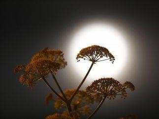 Las mejores imágenes de la 'superluna de gusano'