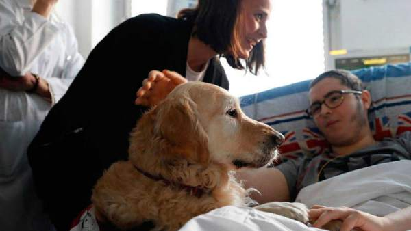 Un perro para la UCI pediátrica de un hospital