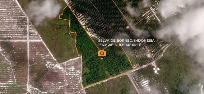 Zona salvada de la deforestación en Borneo
