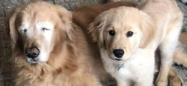 Charlie y su perro lazarillo, Maverick.