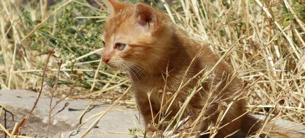 Epic en Ibiza propone crear un centro insular para rehabilitación de animales abandonados