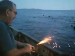 Pescador leones marinos