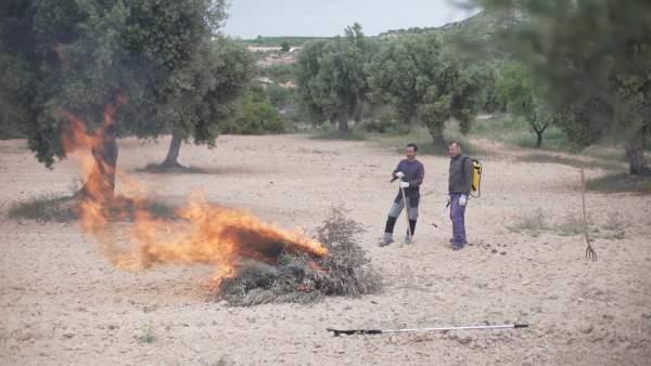 Concluye el plazo para la realización de quemas agrícolas