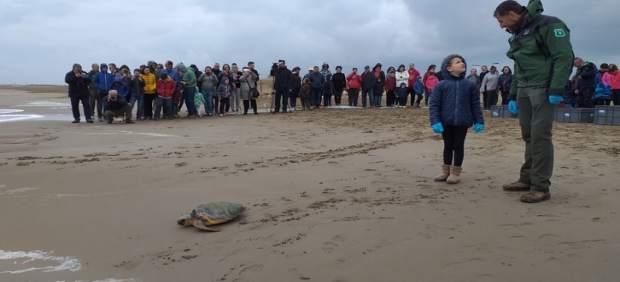 Liberadas en el Delta de l'Ebre (Tarragona) cinco tortugas atrapadas en redes de