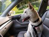 Viajar en coche con mascotas: así debes llevarlas