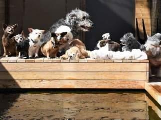 Un hombre adopta perros mayores
