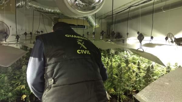 Operación contra una plantación de marihuana