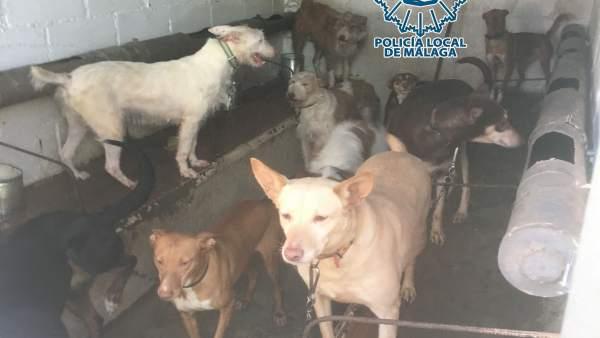 Málaga.- Sucesos.- Denunciada una residencia canina en Málaga y a varios propiet