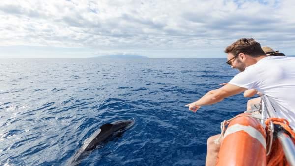 [Grupocanarias] Nota De Prensa Y Fotografías: Cetáceos Sostenibilidad