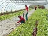 Instalaciones de Gardeniers