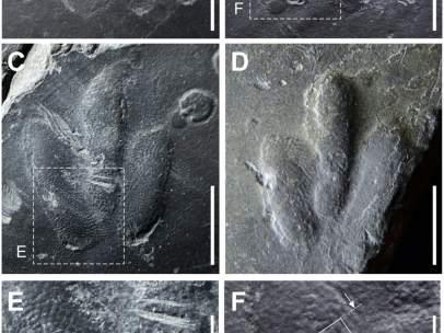 Huellas de dinosaurios