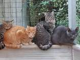 Gatos colonia
