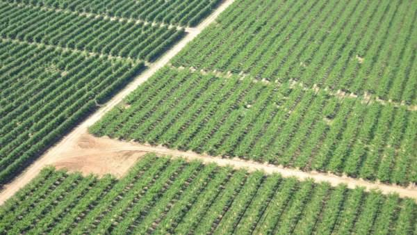 Vista aérea de una zona de regadío