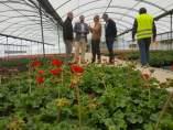 El vivero municipal del Mayayo trabaja en el cultivo de 50.000 geranios que van a decorar los Jardines de Primavera