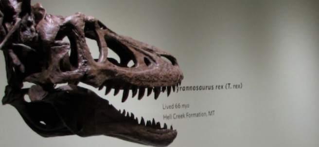 Tiranosaurio rex a la venta