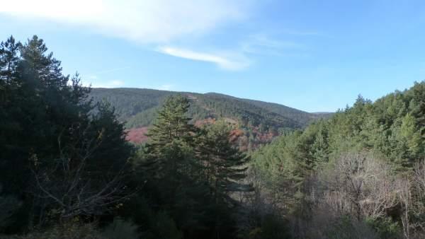 El Parque Natural Sierra de Cebollera ofrece este sábado un paseo guiado por 'Los altos bosques del Iregua'