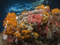 Granada.- Una web divulga los valores naturales del litoral granadino para frenar 'su deterioro actual'