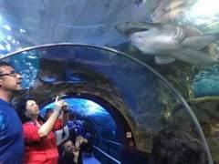 Un total de 3.437 personas visitaron el aquarium donostiarra el primer día de Semana Santa