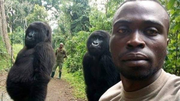 El 'selfie' de un guarda forestal en el Congo con dos gorilas muy humanos