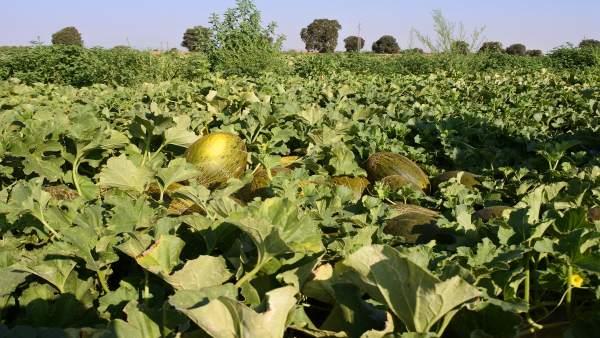 Toledo acogerá un seminario nacional que debatirá las últimas novedades en I+D+i en cultivos hortícolas en septiembre