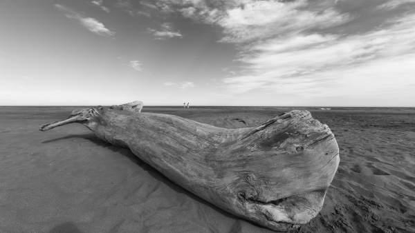 Muestra de fotografías de Javier Belver 'Lo que deja el mar' en Bantierra