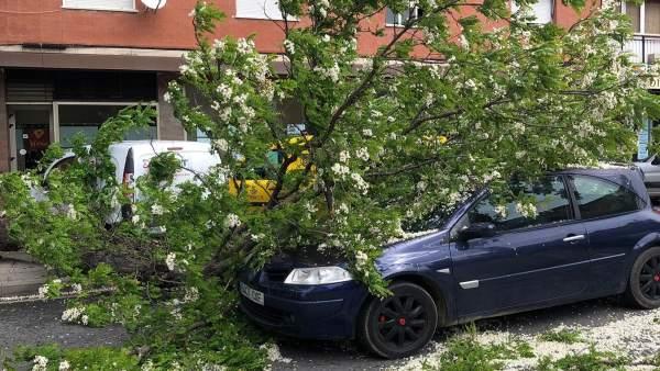 Sucesos.- Ileso un hombre tras caerle una rama de 4 metros mientras circulaba en su coche en Toledo