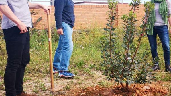 Podem planta árboles en los terrenos de la ZAL para la 'recuperación verde' de esta zona de la Punta