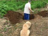 Tumba para un perro